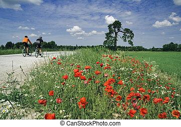 entrenamiento, de, bicyclists, en, hermoso, camino, con, un, florecer, poppy., el, pintoresco, azul oscuro, cielo, con, clouds.