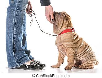 entrenamiento, perro