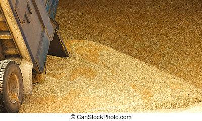 entrepôt, grain, tas, storage.