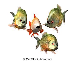 entrevue, concept, poisson rouge, piranhas