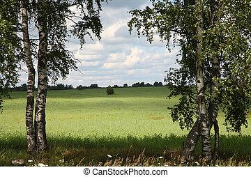 Entry in field