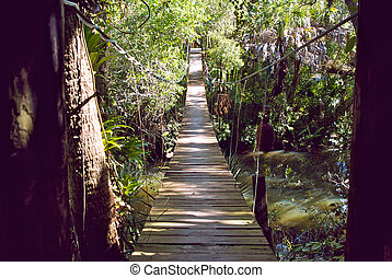 entry to walking bridge in tropical forest