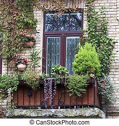 envahi, fleurs, vieux, balcon