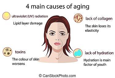 envelhecimento, isolado, ilustração, vetorial, fundo, branca, causas