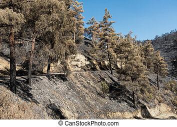 Enviromental damage after forest fire