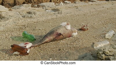 Environment and wildlife: dead young dolphin on the sea shore. Earth wildlife, environmental pollution, ecological catastrophe. Dead animal