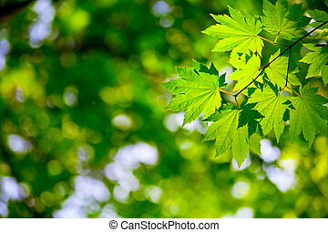 Environment background - Green leaves background for...