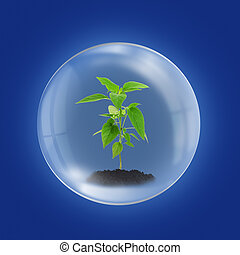 Environment concept with young plant in glass sphere