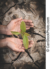 environment Earth Day In the hands of trees growing seedlings. Bokeh green Background Female hand holding tree on nature field grass Forest conservation concept,  reduce global warming.