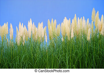 environment-friendly reeds