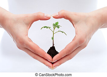 Environmental awareness and protection concept - woman holding young seedling