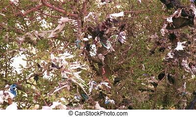 Environmental Damage - Tree and garbage