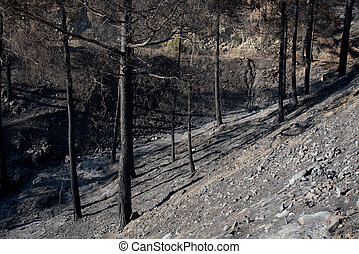 Environmental damage with burned trees after forest fire