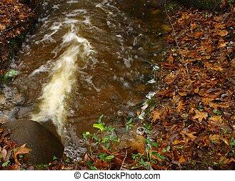 Environmental impact - Storm drain runoff
