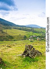 Environmental protection, landscape deforestation