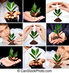Environmental protection - Collage of green sprout...