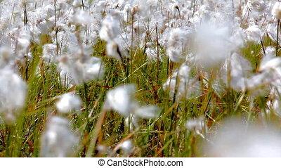 Environmentally friendly cotton fabrics. Blooming cotton...