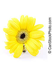Environmentally Friendly - Sunflower-like daisy shown with...