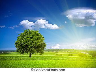 environnement, vert, nature