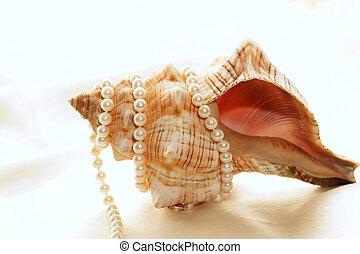 envuelto, perlas, cáscara, alrededor