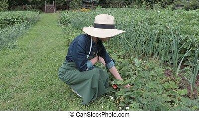 eper, női, kertész, talál
