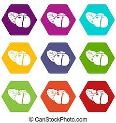Ephedra icons set 9 - Ephedra icons 9 set coloful isolated...
