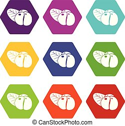 Ephedra icons set 9 vector - Ephedra icons 9 set coloful...