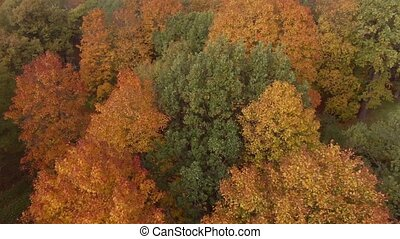 Epic Flight Over Autumn Forrest. Colorful Trees Drone...