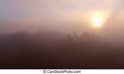 Epic Flight Over Autumn Forrest. Sunrise or sunset. Colorful...