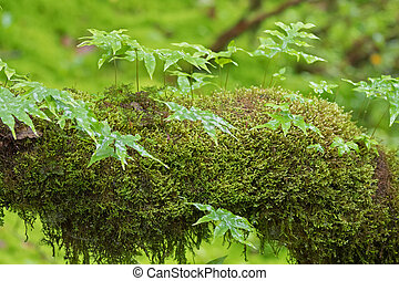 Epiphytic fern and fresh green Peat moss, Sphagnum Moss...