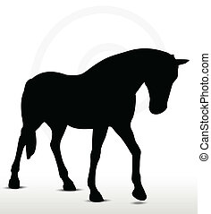 horse silhouette in Walking Head Down position - EPS 10...