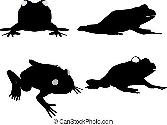frog on white background