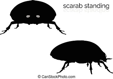 scarab on white background