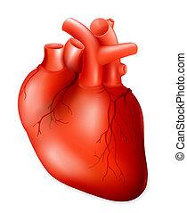 eps10, emberi szív