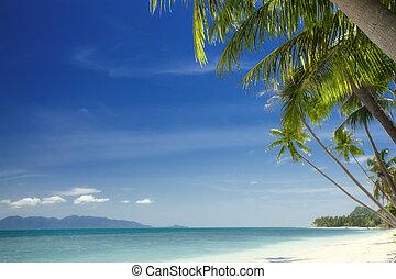 equator - View of nice tropical beach with some palms around...