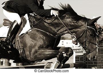 equestre, cavallo cavaliere, azione
