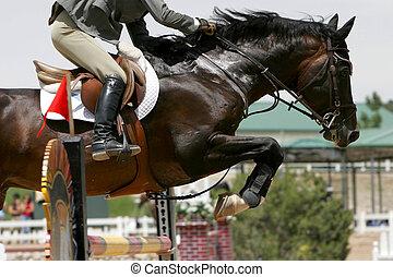 equestre, saltare