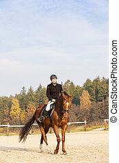 equestre, su, groppa