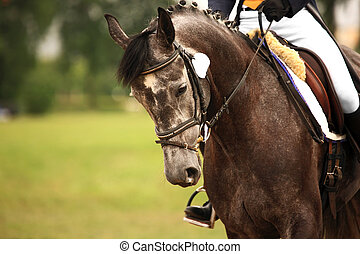 Equestrian - A picture of an equestrian on a grey horse in...