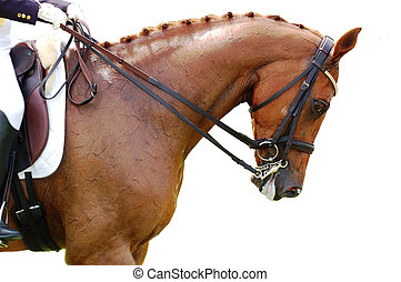 Equestrian - Dressage Horse - A closeup shot of dressage...