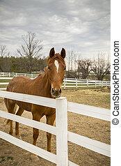 Equestrian Farm Area