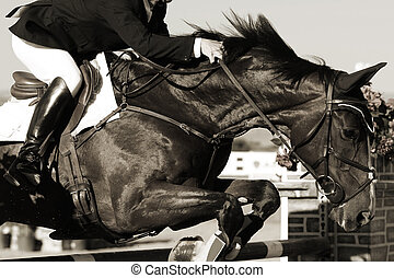 Equestrian Horse and Rider Action - Close up of a show...