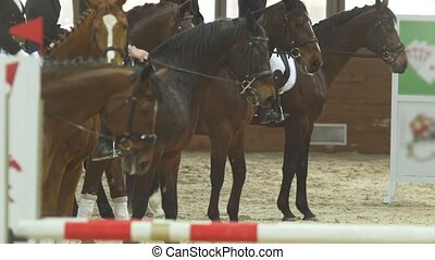Equestrian riders - participants of riding competition - on...