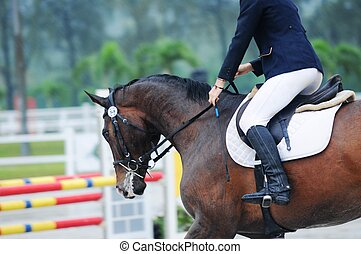 Showjumping horse and rider in showjumping competition.