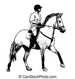 equestrian, sketch illustration