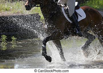 Equestrian Splashing Water