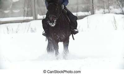 Equestrian sport - a horse walking in snowy field during...