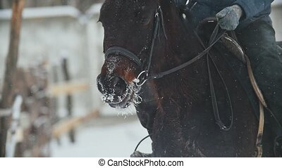 Equestrian sport - a horse with rider walking in snowy field...