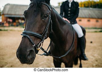 Equestrian sport, female rider on horseback