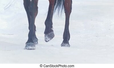 Equestrian sport - hooves of a horse galloping in snowy...